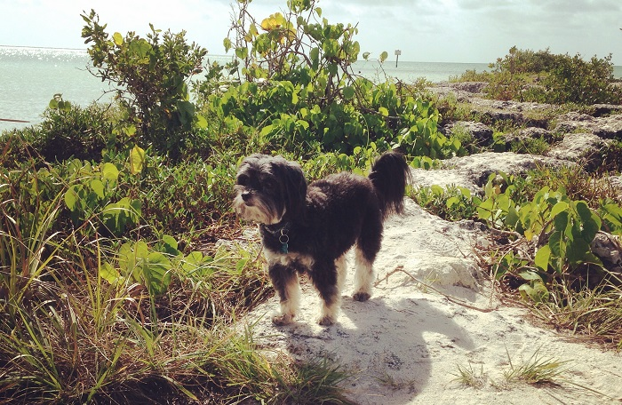 Pet Friendly Key West Vacation Rentals
