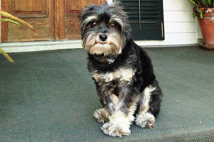 Pet Friendly Rentals - Key West Mojo